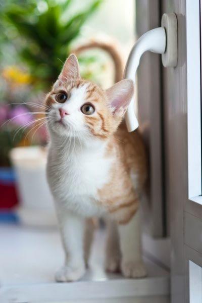 Katze mit Fenstergriff
